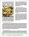 0000071811 Word Template - Page 4