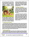 0000071826 Word Templates - Page 4