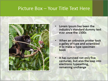 0000071916 PowerPoint Template - Slide 13