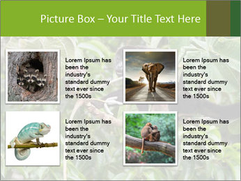 0000071916 PowerPoint Template - Slide 14