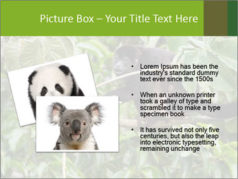 0000071916 PowerPoint Template - Slide 20