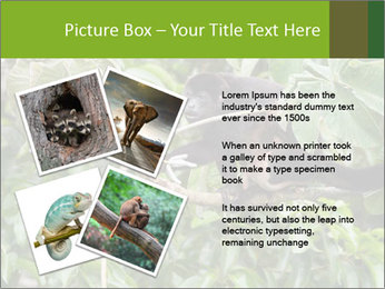 0000071916 PowerPoint Template - Slide 23