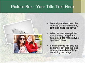 0000071927 PowerPoint Template - Slide 20