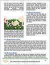 0000071953 Word Templates - Page 4