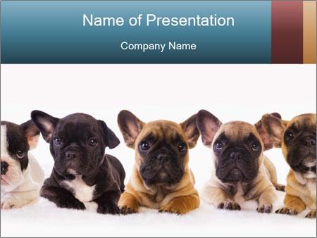 0000072026 PowerPoint Templates