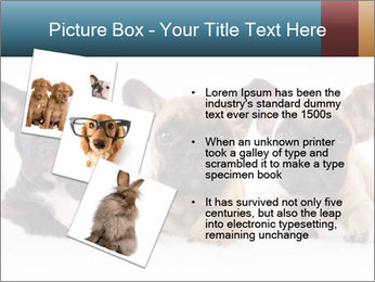 0000072026 PowerPoint Template - Slide 17