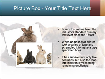 0000072026 PowerPoint Template - Slide 20