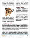 0000072026 Word Template - Page 4