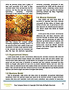 0000072033 Word Template - Page 4