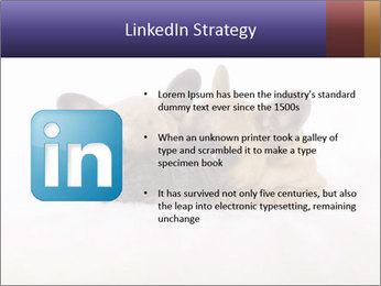 0000072079 PowerPoint Template - Slide 12