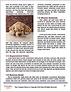 0000072079 Word Template - Page 4