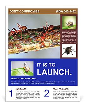 0000072127 Flyer Templates