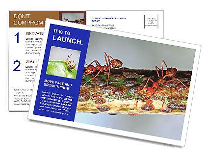 0000072127 Postcard Templates