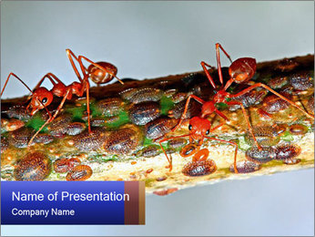 0000072127 PowerPoint Templates - Slide 1