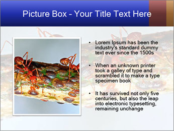 0000072127 PowerPoint Template - Slide 13