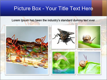 0000072127 PowerPoint Template - Slide 19