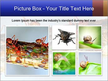 0000072127 PowerPoint Templates - Slide 19