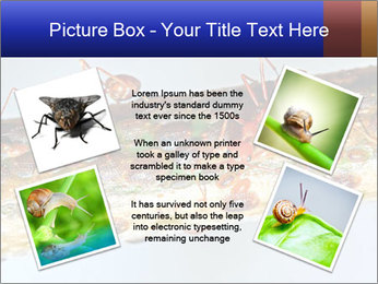 0000072127 PowerPoint Template - Slide 24