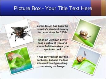 0000072127 PowerPoint Templates - Slide 24