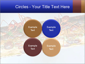 0000072127 PowerPoint Template - Slide 38