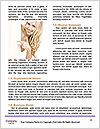 0000072175 Word Template - Page 4