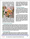 0000072249 Word Template - Page 4
