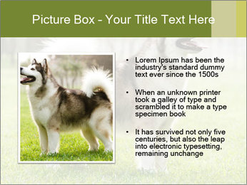 0000072253 PowerPoint Template - Slide 13