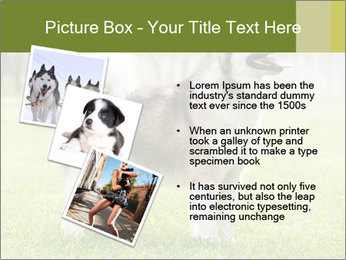 0000072253 PowerPoint Template - Slide 17