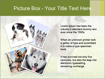 0000072253 PowerPoint Template - Slide 23
