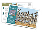 0000072291 Postcard Templates