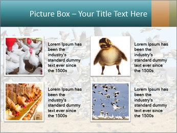 0000072291 PowerPoint Templates - Slide 14