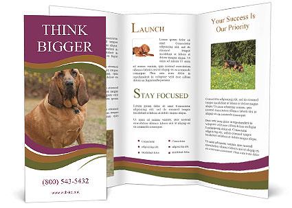 0000072358 Brochure Template