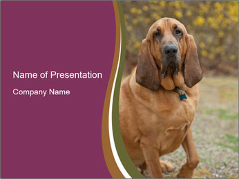 0000072358 PowerPoint Template - Slide 1