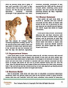 0000072417 Word Template - Page 4