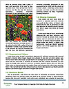 0000072419 Word Templates - Page 4