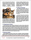 0000072421 Word Template - Page 4