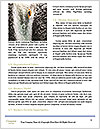 0000072441 Word Template - Page 4