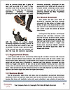 0000072447 Word Templates - Page 4