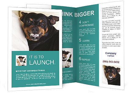 0000072488 Brochure Template