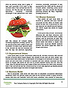0000072525 Word Template - Page 4