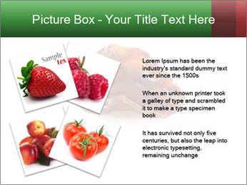0000072546 PowerPoint Templates - Slide 23