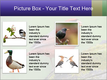 0000072560 PowerPoint Template - Slide 14