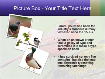 0000072560 PowerPoint Template - Slide 17