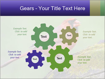 0000072560 PowerPoint Template - Slide 47