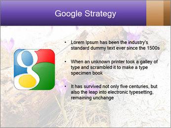 0000072575 PowerPoint Templates - Slide 10