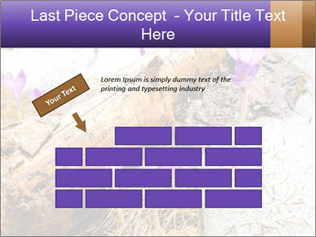 0000072575 PowerPoint Templates - Slide 46