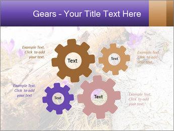 0000072575 PowerPoint Templates - Slide 47