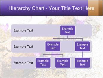 0000072575 PowerPoint Templates - Slide 67