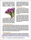 0000072575 Word Templates - Page 4