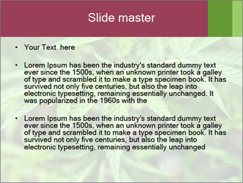 0000072612 PowerPoint Template - Slide 2